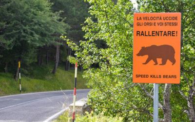 Perché è importante tutelare l'orso marsicano?